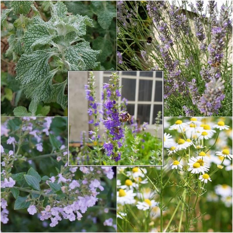 Kit graines de plantes médicinales Semences du Puy