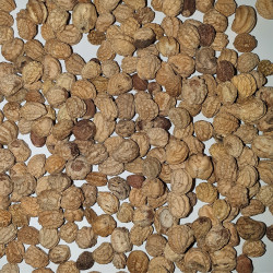 Tropaeolum majus mix Semences du Puy