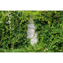Plantes grimpantes (graines) vivaces & fleurs | Semences du Puy